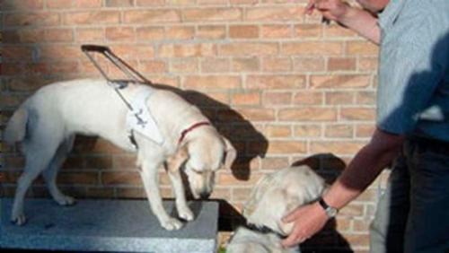 Herreværelset - Tilblivelse af en førerhund