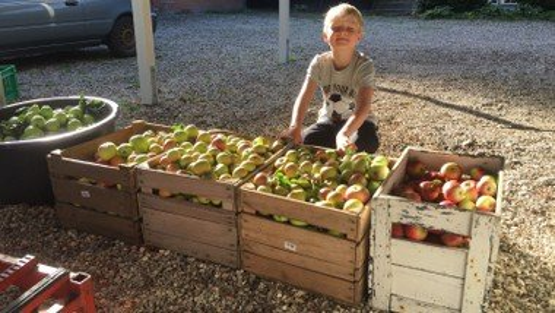 Æblehøstgudstjeneste  - ARKen medvirker