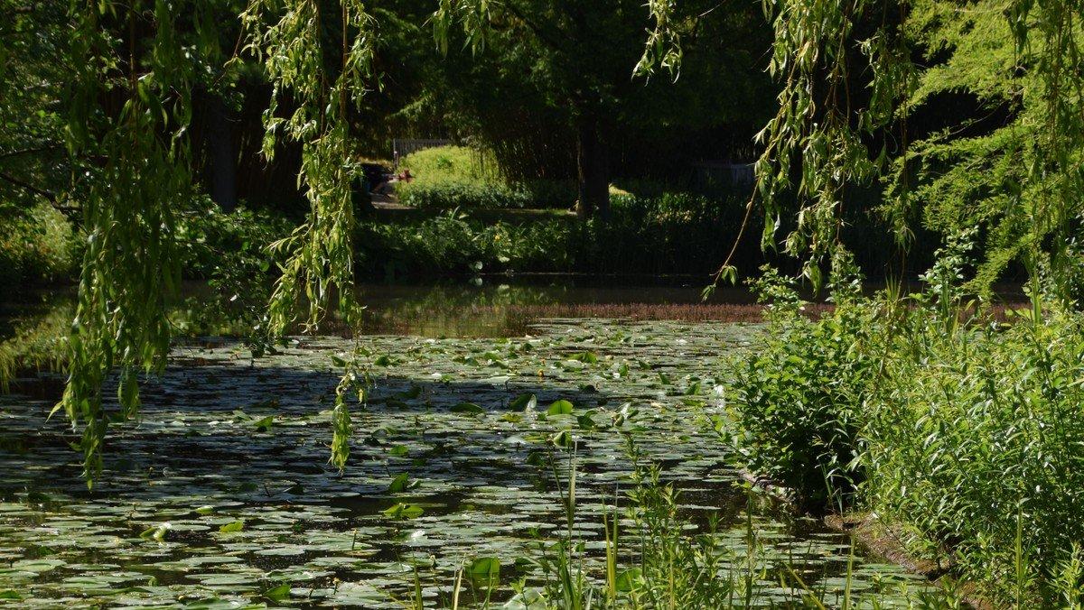 Halbtages-Ausflug in den Botanischen Garten, Klein Flottbek