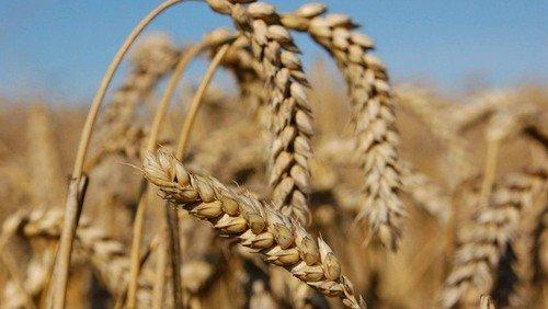Høst i melholt