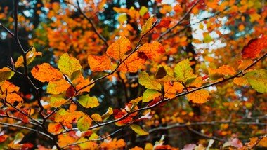 Unsplash Photos for everyone Search autum