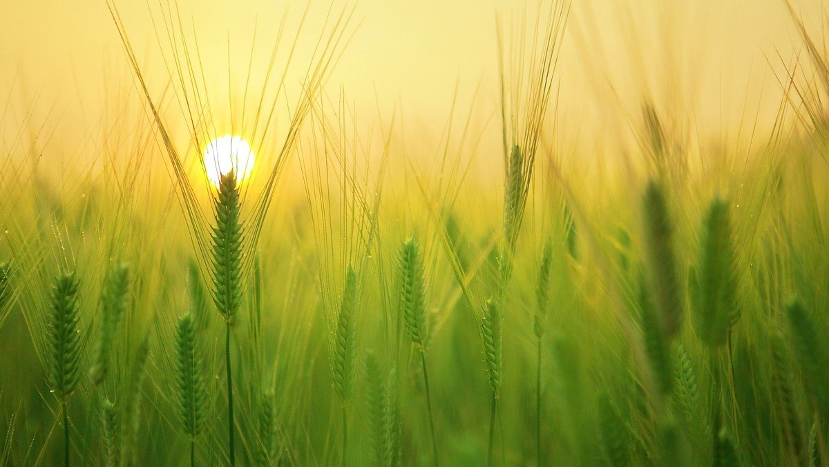 Højmesse - fælles høstgudstjeneste