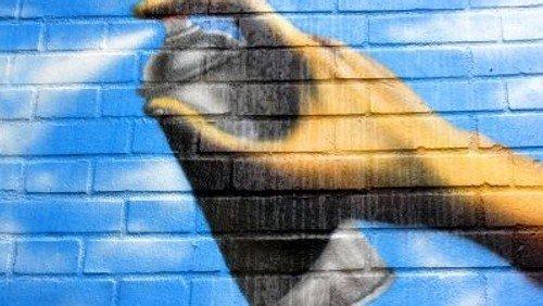 Graffiti und StreetArt - Stadtrundgang in Hamburg