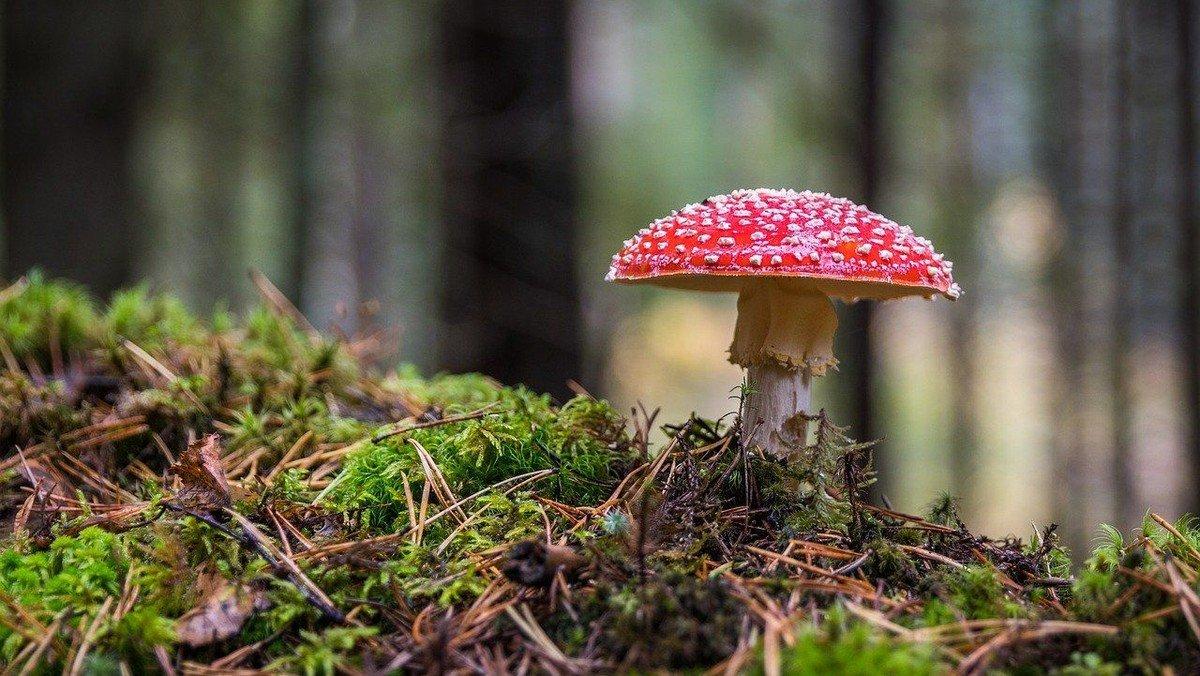 Wanderung zur Ökologie der Pilze - Leben braucht Vielfalt!