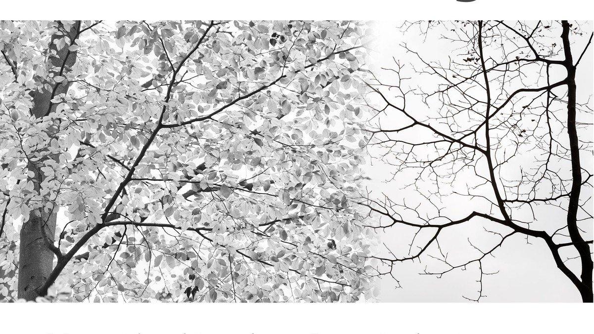 """""""Herbstliches..."""" in Bild, Text & Musik"""