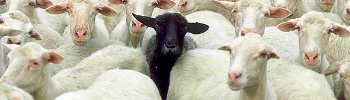 En fåreflok