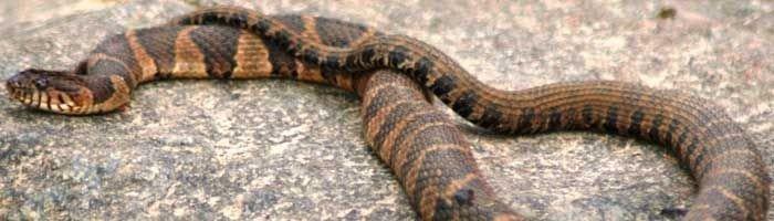 Billede af en slange