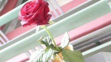 Brylup - en rød rose