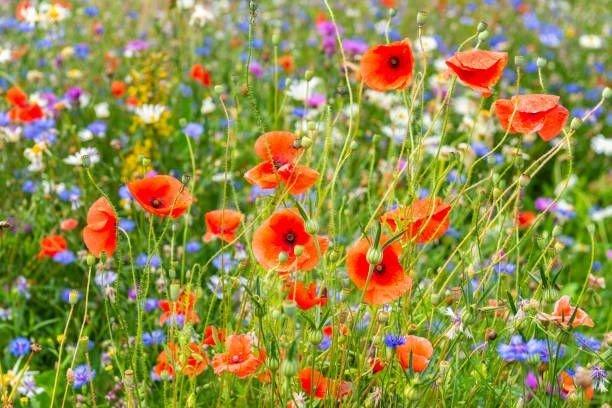 En mark med sommerblomster