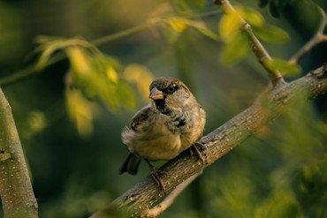 Fugl på en gren