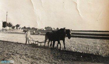 Hørkærgård 1920-40. Efterårspløjning med svingplov. Produceredes i Danmarl fra 1830 og fortrængte o. 1860 fuldstændig hjulploven. Her er 2 x 2 heste i gang på samme mark, men ploven kunne også trækkes af en enkelt, kraftig hest. Moderne, traktordrevne plove bruger samme plovskærsprincip, men med flere/mange plovskær.