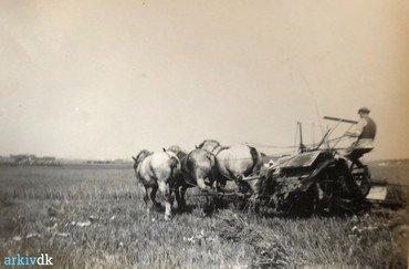 1920-40.  Selvbinderen, trukket af 3 kraftige heste.