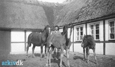 Foto fra Lysegårds gårdsplads med Holger Andersen med heste og føl. Den 4-længede gård nedbrændte under den store brand i Vindinge i 1954. Den røde lade og svinehuset blev reddet.