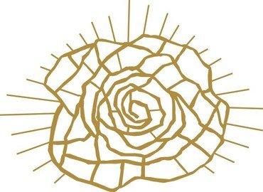 Tegning af strukturen af en rose
