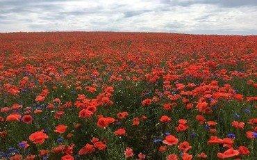 Himmel mit Wolken über Feld mit Blumen