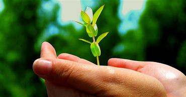 hånd med plante